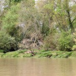 IMG_4918 Flussufer