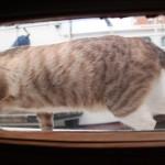 IMG_5465 Katze