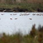IMG_5974 Flamingos