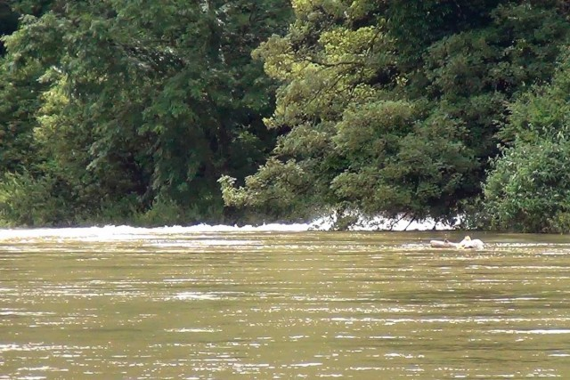 Hochwasser Doubs