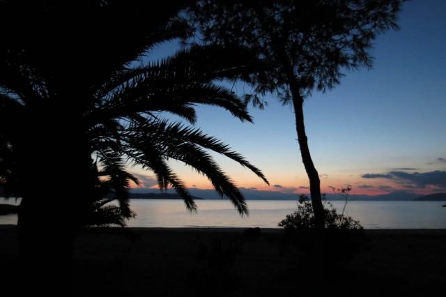 img_1609-palmen